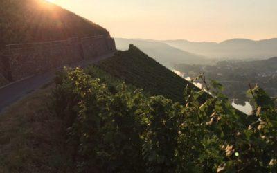 Müssen wir unsere Wein-Kultur-Landschaft dafür opfern ?